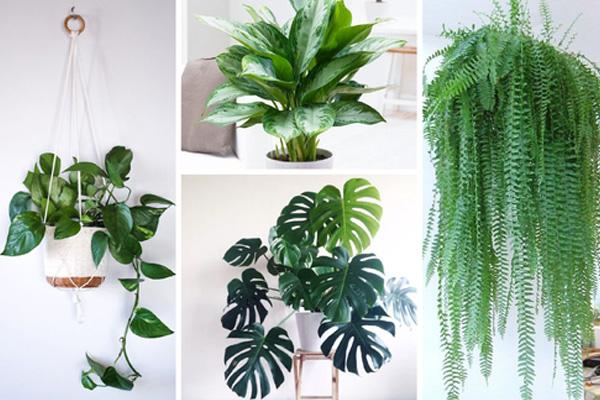 indoor-plants-supplier