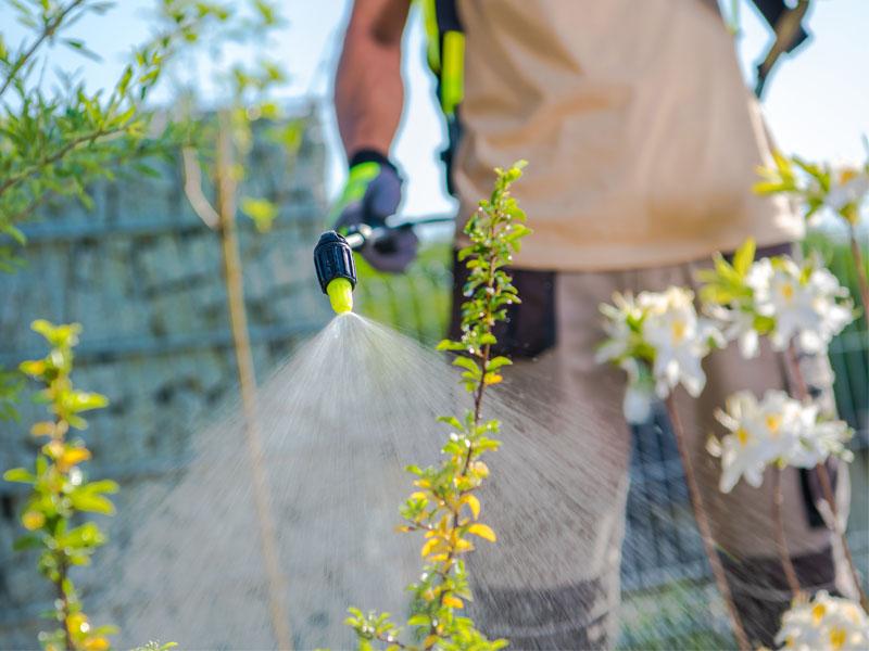plnat-fertilizers-and-chemicals